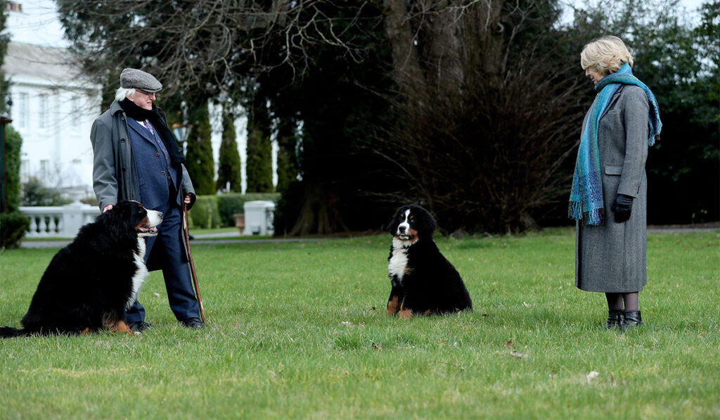 This image has an empty alt attribute; its file name is Michael-D-Higgins-New-Dog-4-1024x597.jpg